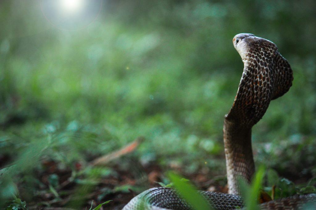 snake-5515691_1280